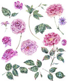 Set of vintage watercolor roses leaves, buds branches, flowers - 220381931