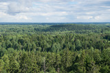 View from Suur Munamagi over forest landscape in South Estonia.