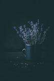 Lavendel - 220397343