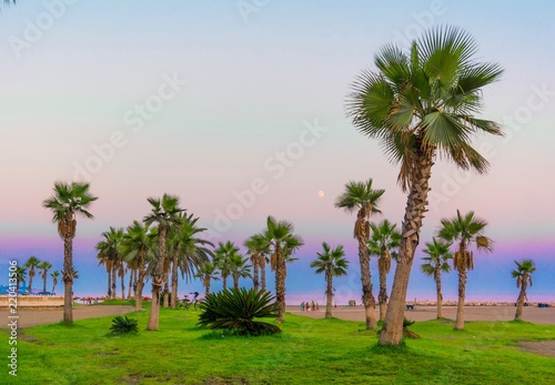 Palm trees. Tropical beach background. Summer vacation and nature travel adventure concept. Photo stock.