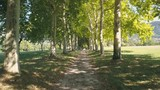 Plane trees alley to historical mansion in Europe - 4K - 220421181