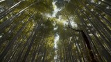 Arashiyama, bamboo forest in Kyoto. 25fps. - 220440950