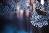Christmas background. Frosty pine branches. - 220450942