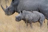 African Black Rhino - 220455132