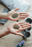 woman's hands holds parsley and dill seeds, top view stock photo image - 220472733