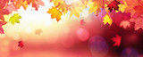 Falling Autumn Maple Leaves Natural Colorful Background - 220494552
