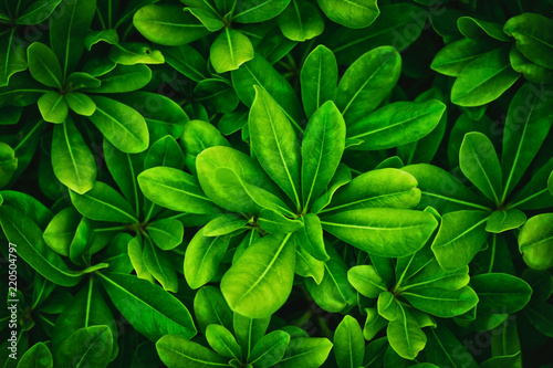 Green leaves nature plants. Abstract background - 220504797