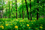 Beautiful green forest landscape in summer. Nature scenery with yellow wild flowers - 220505154