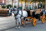 Coche de caballos - 220510908
