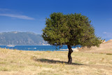 Lonely tree on a dry island - 220541745