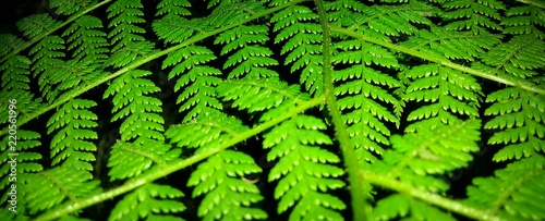 night time fern - 220561996
