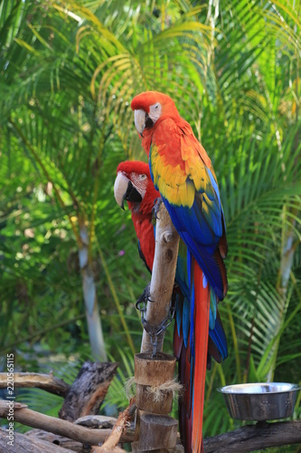 Fototapeta Birds
