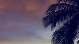 Sunrise with coconut palm tree - 220579563