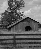 Barn and fence - 220590985