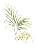 watercolor painting of coconut palm leaves isolated on white background - 220601194