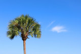 Southern nature background. Palm tree against blue sky. Horizontal composition with copy space. Good for card, poster or banner. - 220606189