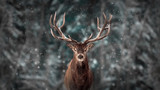 Noble deer male in winter snow forest. Artistic winter christmas landscape. - 220611589