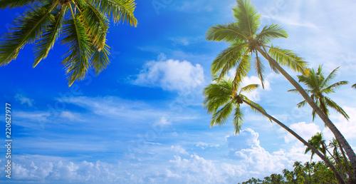 Palmy na tropikalnej plaży. Tło podróży.