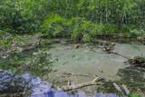 上高地の泉