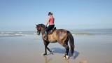 jolie cavalière au trot (slow motion) - 220645775