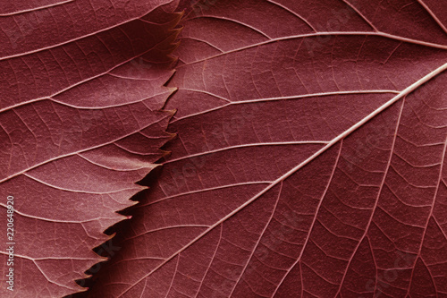 Plakat Macro image of red leaves, natural background