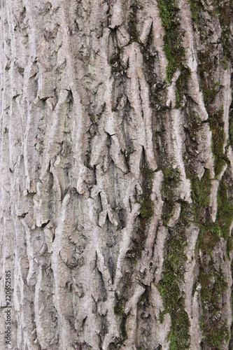 wood texture - 220652585