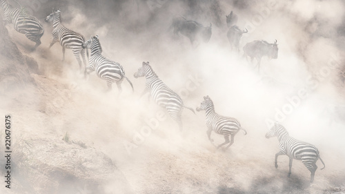 Fridge magnet Dramatic Dusty Great Migration in Kenya
