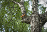 Squirrel on a tree - 220679184