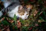 Cute little cat - 220679513