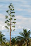 arbres et ciel - 220685110