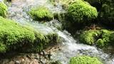 Mossy stones in a virgin creek. Slow motion. - 220697169