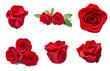 Leinwanddruck Bild - flower rose petal blosspm background