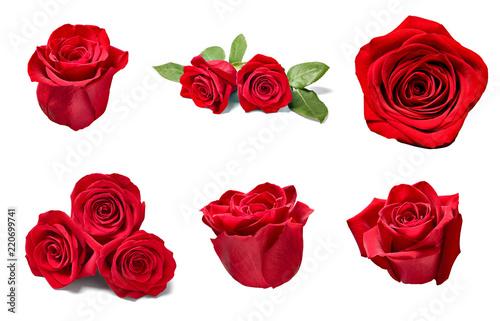 Leinwanddruck Bild flower rose petal blosspm background