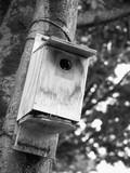 野鳥の巣箱 - 220709165