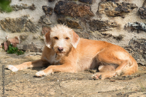 Portriat little cross breed dog