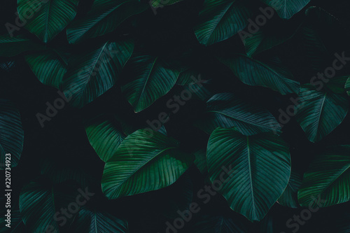 Dark botanical background tropical leaves faded bg - 220734923
