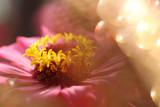 dreamlike pink flower with light spheres - 220738749