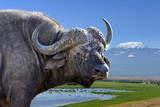 Wild African buffalo bull - 220744133