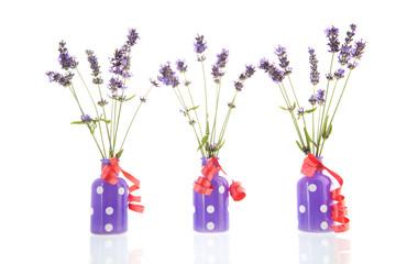 French lavender in vases