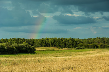 Field in front of the forest and rainbow on a cloudy sky © darekb22