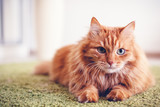 Portrait of a funny beautiful red fluffy cat with green eyes in the interior, pets - 220757539