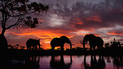 Elephants walking by the lake