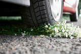 bouquet of flowers under the car wheel, concept of a car accident - 220764537