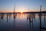 Multiple Tree Stumps Manasquan Reservoir Sunrise Refrection - 220779517