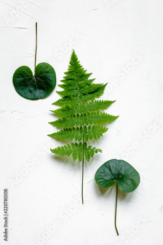 Green leaves on white concrete background, flat lay - 220780308