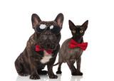 stylish cat and dog couple wearing bowties