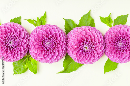 Dahlia ball-barbarry with green leaves and buds - top view on pink bright summer flower on pastel background. - 220789120