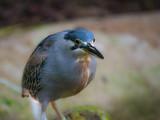 Oiseau - 220803584