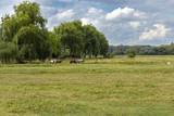 Pferde auf einer Weide - 220809373