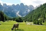 paesaggio montagna natura mucca bosco alberi verde rocce cime cielo azzurro nuvole pascolo erba fattoria campo alpi rurale